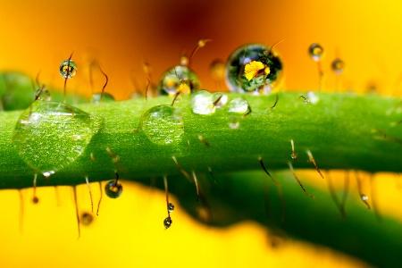 Raindrops On Roses Whiskers On Kittens..