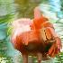 2Flamingo Impressions - ID: 10827429 © Carol Eade