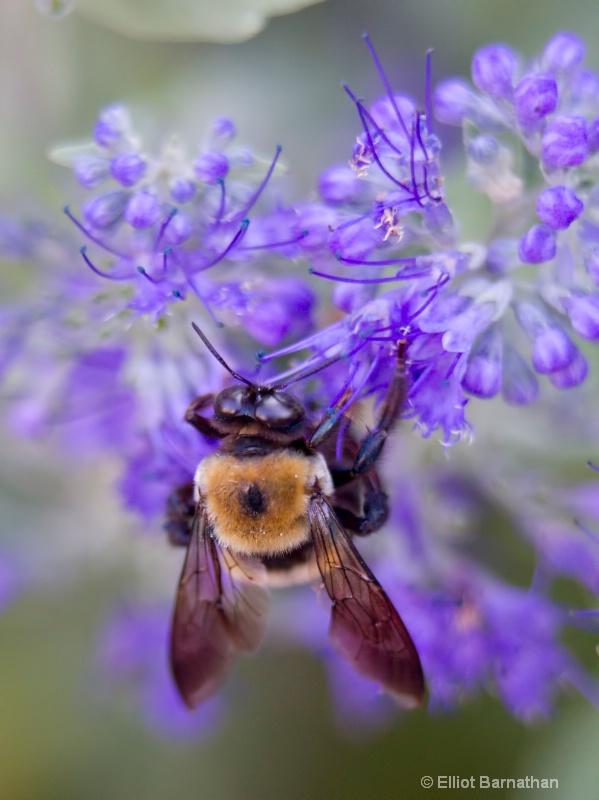 Bees 15 - ID: 10837146 © Elliot S. Barnathan