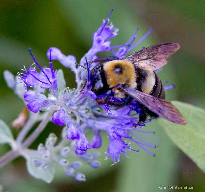 Bees 10 - ID: 10837152 © Elliot S. Barnathan