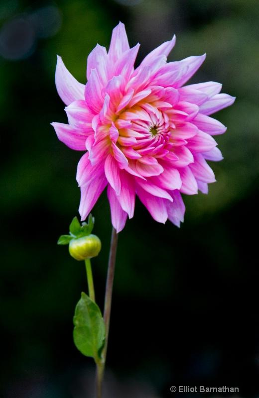 Flowers 8 - ID: 10837243 © Elliot S. Barnathan