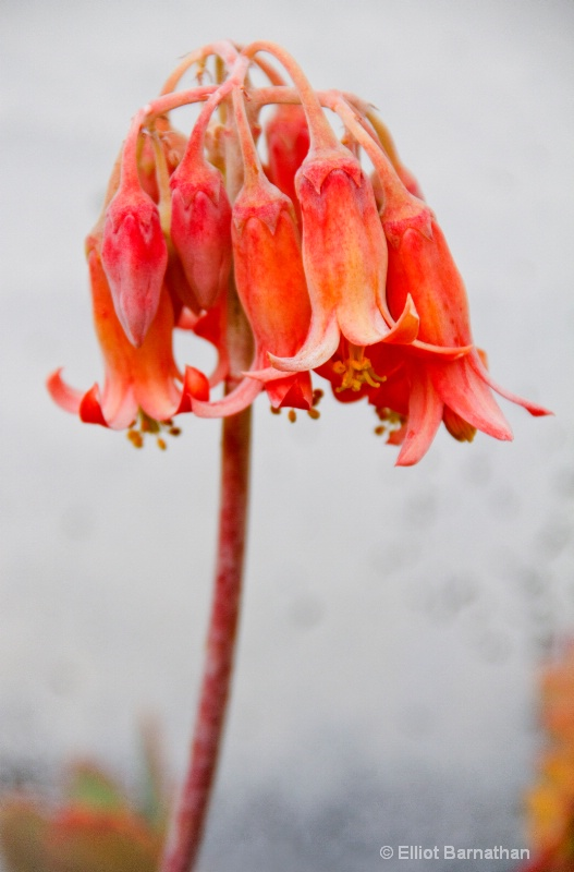 Flowers 6 - ID: 10837253 © Elliot S. Barnathan