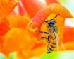 BEE-auty