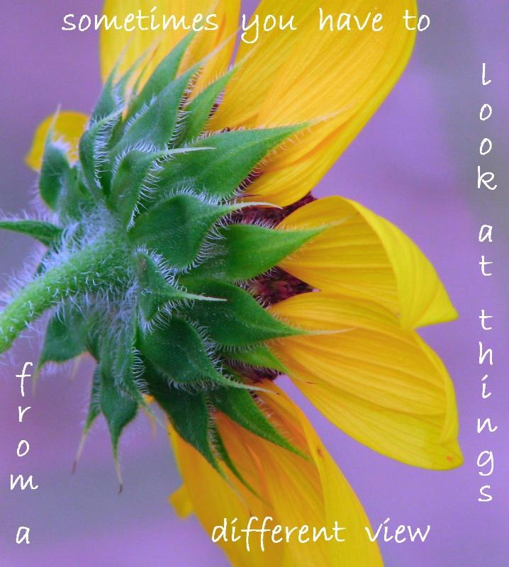 Inspirational Sunflower