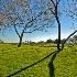 © gwen feasel PhotoID # 10842035: Tree Shadows
