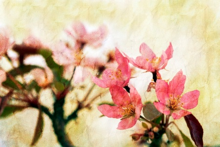 remembrance of  spring