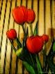 Friday Tulips