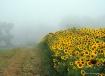 Fog left...sun ri...