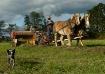 Amish Horsepower