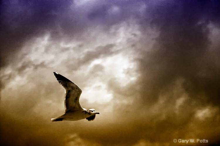 Soaring With The Spirits - ID: 10877361 © Gary W. Potts