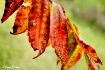 Autumn Leaves Fre...