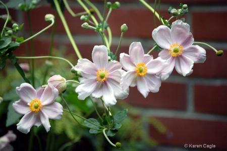 Ashland Blooms II