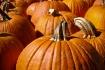 Pumpkins....