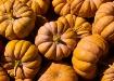 Pumpkin collage.....