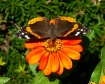 Red Admiral Butte...