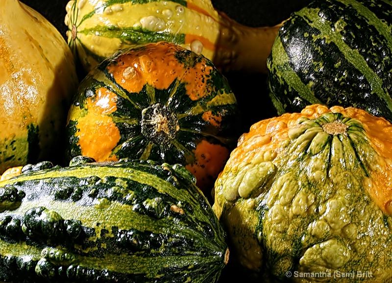 Shiny Autumn Gourds