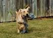 Puppy Spirit 3