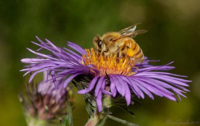 Bee In Denver