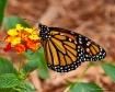 monarch on multi-...