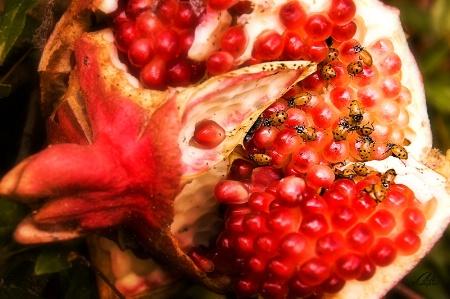 The Ladybugs' Picnic