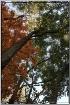 Autumns Taken Ove...