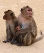 Monkey Island inh...