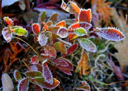 colorful frost...