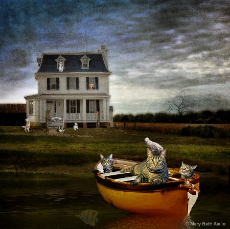 Three Cats in a Boat