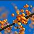 © Natasha Pliss PhotoID # 10959947: Succulent - 2