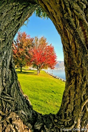 Framing Fall Colors