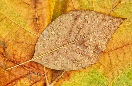 ~ leaf drop ~