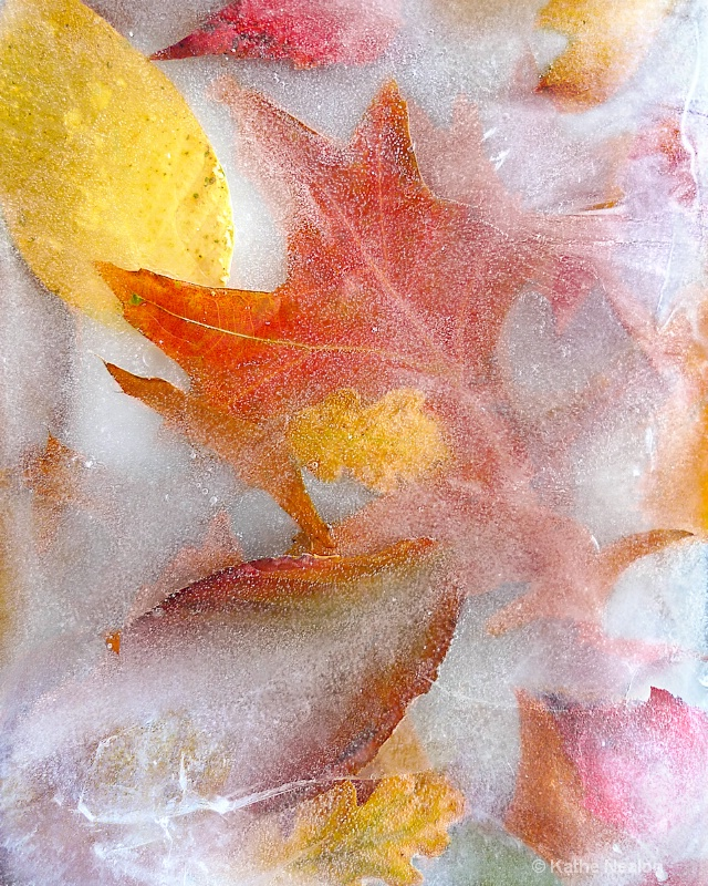 Autumn Ice