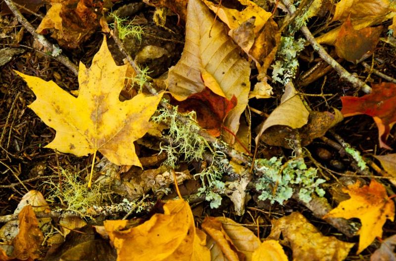 Leaves and Lichen - ID: 11012745 © Gerald L. Tomanek