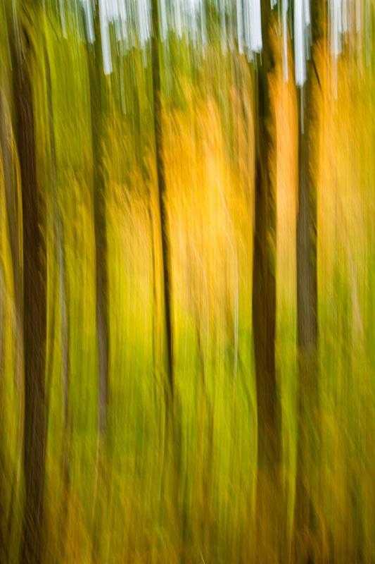 Fall Vertical Blur - ID: 11012748 © Gerald L. Tomanek