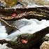 © Gerald L. Tomanek PhotoID # 11012751: Rushing Stream Encircled