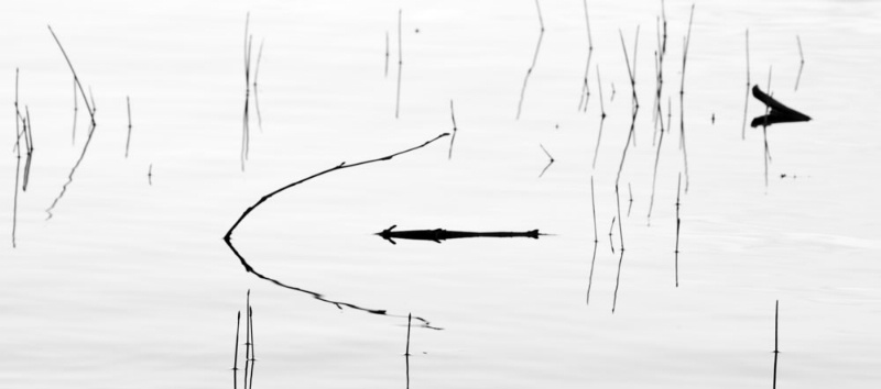 Reed Calligraphy Two - ID: 11012758 © Gerald L. Tomanek