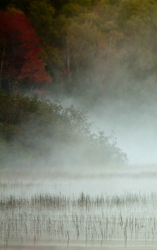 Reeds and Mists in the Fall - ID: 11012762 © Gerald L. Tomanek