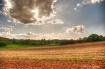 Fields Afar