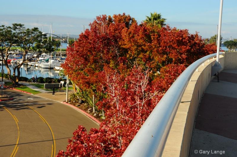 """San Diego """"Fall"""""""