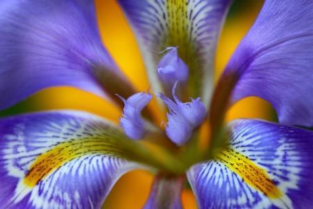Iris Central