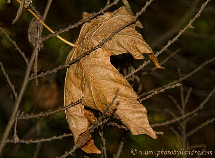 Autumn 2010 - ID: 11047832 © Liandra Barry