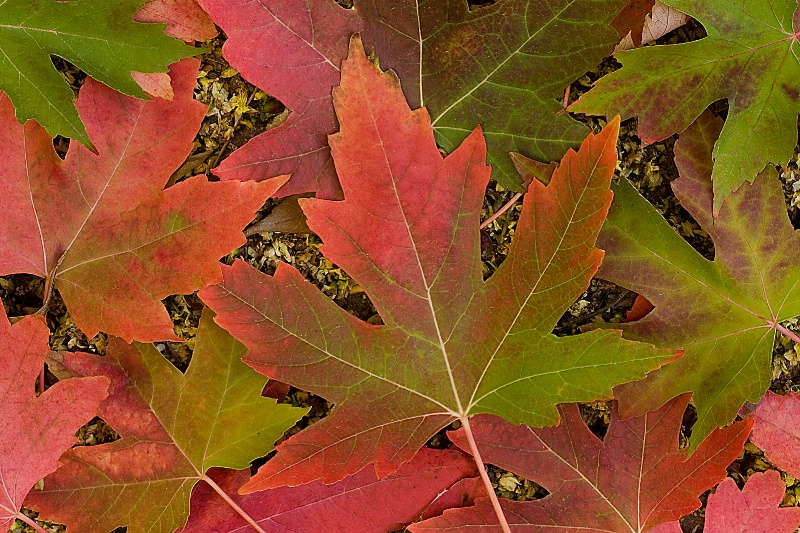 First Sign of Fall - ID: 11059986 © Laura Wald