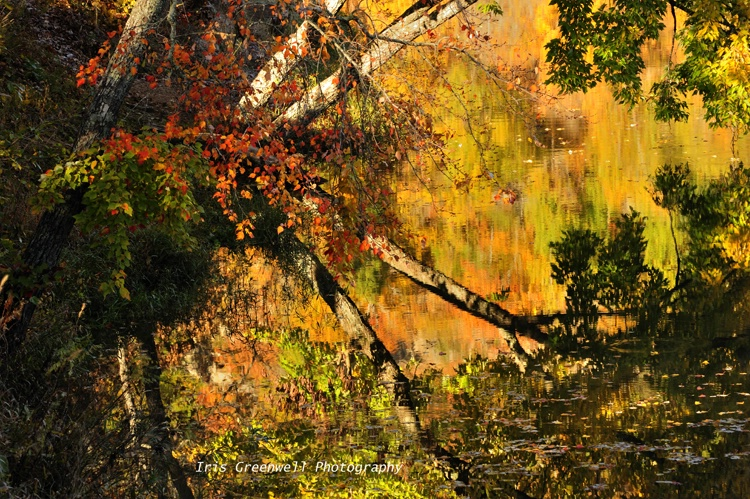 Fall's Reflections