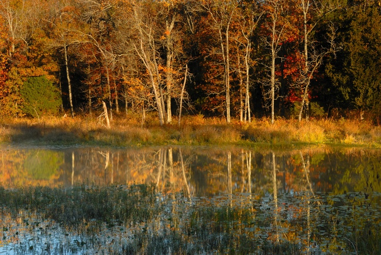 Lake Carlton Reflections