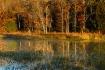 Lake Carlton Refl...