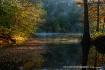 Cypress in the Mi...