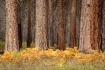 Yosemite woodland...