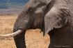 Elephant, Ngorong...