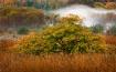 Tree & Morning Fo...