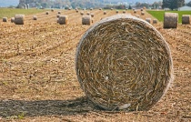 Agricultural Bale-Out